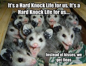 It's a Hard Knock Life for us, It's a Hard Knock Life for us....