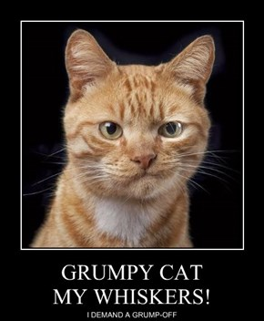GRUMPY CAT MY WHISKERS!