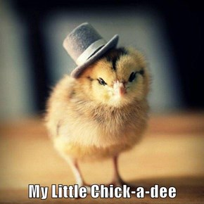 My Little Chick-a-dee