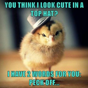 YOU THINK I LOOK CUTE IN A TOP HAT?   I HAVE 2 WORDS FOR YOU: PECK OFF...