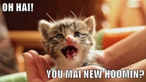OH HAI!   YOU MAI NEW HOOMIN?