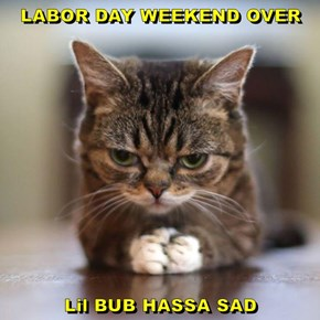 LABOR DAY WEEKEND OVER  Lil BUB HASSA SAD