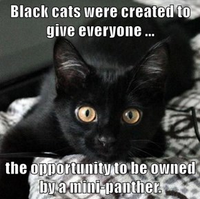 Black cats were created to give everyone ...   the opportunity to be owned by a mini-panther.