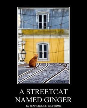 A STREETCAT NAMED GINGER