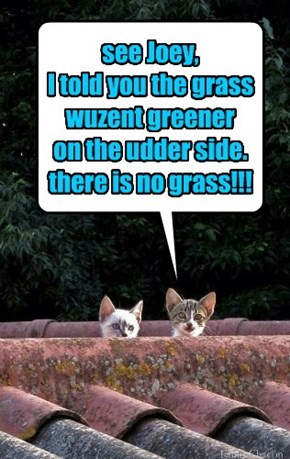 see Joey,  I told you the grass wuzent greener  on the udder side. there is no grass!!!