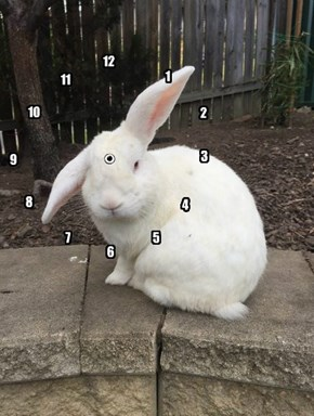 Looks Like It's Just a Hare Past 1:37