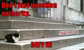 Don't just question authority.                          DEFY it!