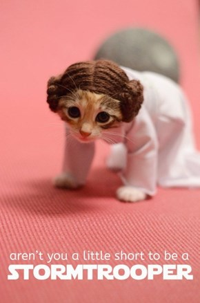 Squee Wars