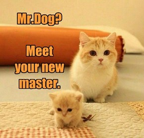 Mr.Dog?  Meet  your new master.