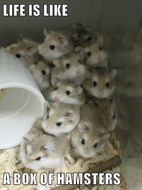 LIFE IS LIKE  A BOX OF HAMSTERS
