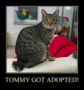 TOMMY GOT ADOPTED!