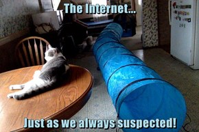 Tubes and cats everwheres!