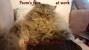 Psom's face             at work  today!  Run and hide!