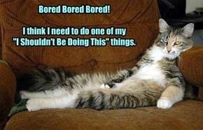 Beware the bored kitteh!