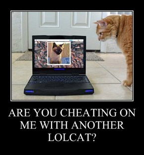 ARE YOU CHEATING ON ME WITH ANOTHER LOLCAT?