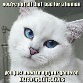 you're not all that  bad for a human  you just need to up your game on kitteh gratifications