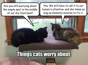 Things cats worry about.