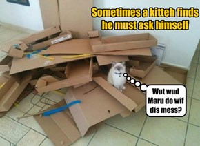 Sometimes a kitteh finds he must ask himself