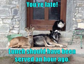 You're late!  Lunch should have been served an hour ago.