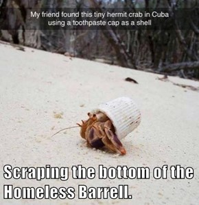 Scraping the bottom of the Homeless Barrell.