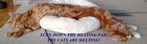 TURN DOWN THE HEATING PAD,                                                                                   THE CATS ARE MELTING!