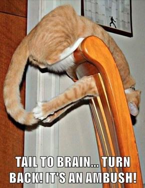 TAIL TO BRAIN... TURN BACK! IT'S AN AMBUSH!