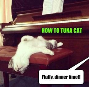 HOW TO TUNA CAT