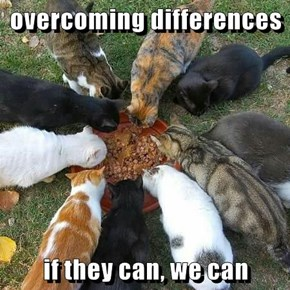 overcoming differences  if they can, we can