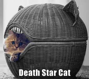 Death Star Cat