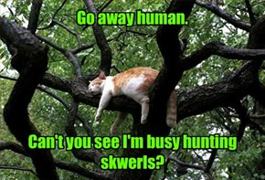 Go away human.      Can't you see I'm busy hunting skwerls?