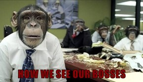 HOW WE SEE OUR BOSSES