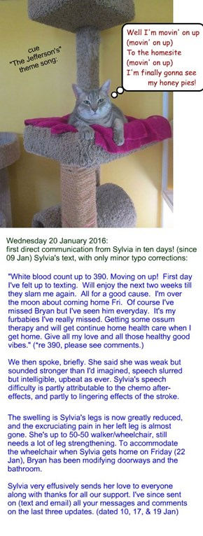 """Movin' on up"": Sylvia update Wednesday 20 January 2016"
