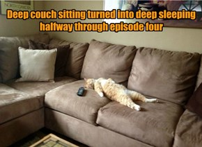 Cats weren't designed for binge-watching