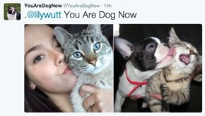 YouAreDogNow Will Find the Perfect Picture of You as a Dog