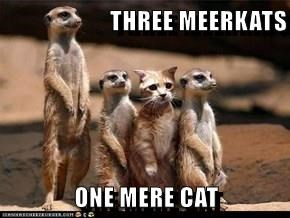 THREE MEERKATS  ONE MERE CAT