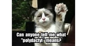 "Can  anyone  tell  me  what  ""polydactyl '  means?"