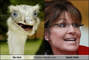 Dis bird Totally Looks Like Sarah Palin