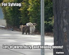For Sylviag