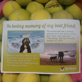 Instagram User Memorializes His Best Friend By Sending Out Free Tennis Balls