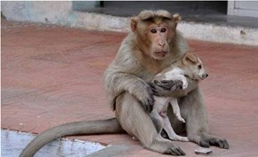 Adorable Monkey Multiplies His Cuteness by Adopting a Puppy