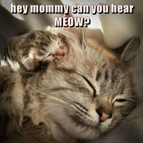 hey mommy can you hear MEOW?