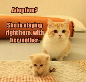Adoption?  She is staying right here, with her mother.