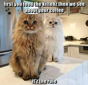 Hey, My Coffee Maker Is MISSING! What Did You Two DO With It?!