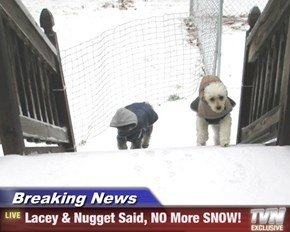 Breaking News - Lacey & Nugget Said, NO More SNOW!