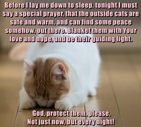 Before I lay me down to sleep. tonight I must say a special prayer, that the outside cats are safe and warm, and can find some peace somehow, out there. Blanket them with Your love and hope, and be their guiding light.   God, protect them, please.
