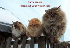 Snow season                                                                         break out your winter cats