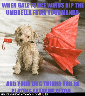 WHEN GALE FORCE WINDS RIP THE UMBRELLA FROM YOUR HANDS,  AND YOUR DOG THINKS YOU'RE PLAYING EXTREME FETCH...