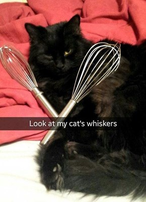 Check Out Those Whiskers