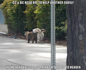 CC & BC HEAD OFF TO HELP ANOTHER FAMILY  IN THE NEXT EPISODE OF RAINBOW BRIDGE TO HEAVEN