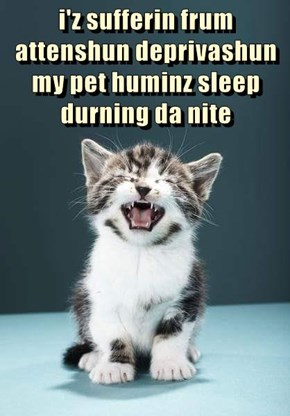 i'z sufferin frum attenshun deprivashun my pet huminz sleep durning da nite